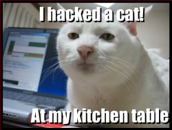 Hackedcat.png